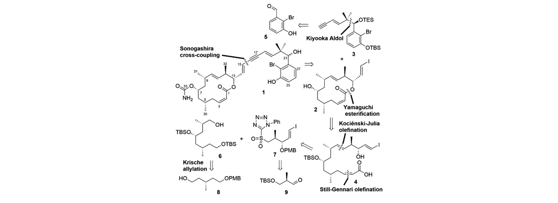 Total Synthesis and Stereochemical Assignment of Callyspongiolide