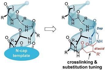 化生院李子刚课题组在稳定多肽螺旋方法学领域取得进展