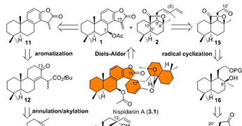 化生院杨震/龚建贤课题组完成了天然产物hispidanin A的不对称合成