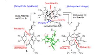 杨震/龚建贤课题组完成天然产物Homodimericin A的仿生全合成研究