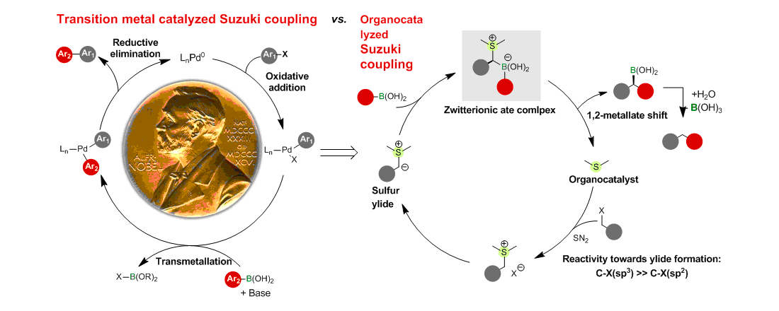 黄湧课题组实现首例非过渡金属催化的Suzuki反应