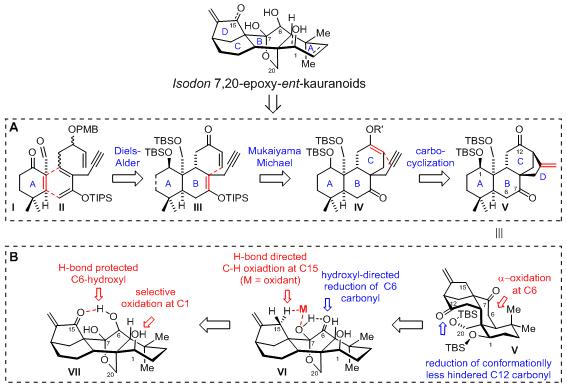 化生学院李志成课题组完成多个ent-Kuarene家族天然产物的全合成及其生物活性研究