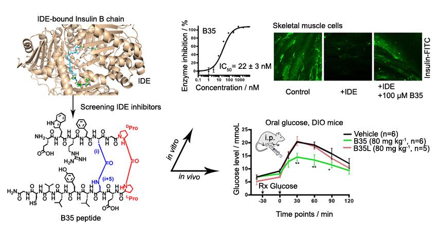 李子刚课题组在β-发夹构象稳定多肽干预蛋白作用领域取得新进展