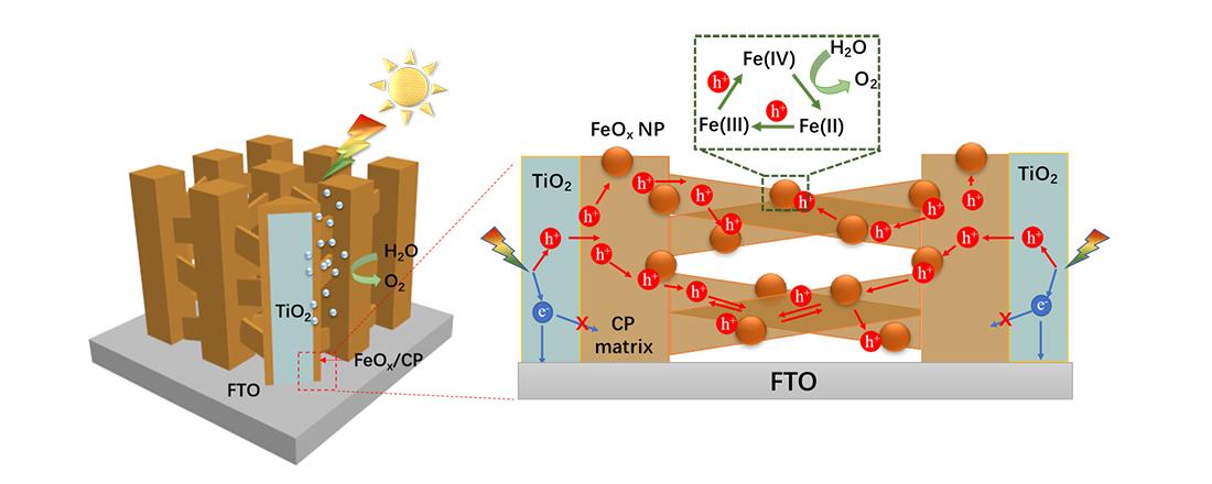 广东省纳米微米材料研究重点实验室在光电分解水制氢领域取得了重大进展