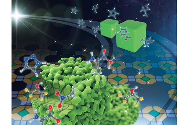 广东省纳米微米材料研究重点实验室在有机小分子致介孔沸石领域取得新进展