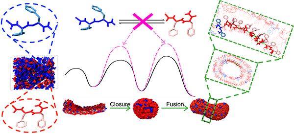 韩伟课题组和李子刚课题组在多肽自组装机制分子动力学研究领域取得重要进展
