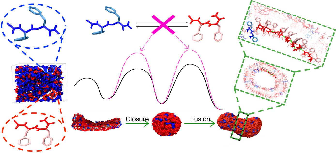 4166am备用韩伟课题组和李子刚课题组在多肽自组装机制分子动力学研究领域取得重要进展