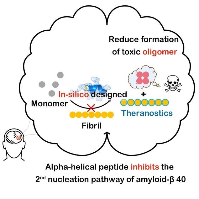 化生学院李子刚/尹丰课题组和韩伟课题组在开发淀粉样蛋白-β 40稳定多肽抑制剂领域中取得新的进展