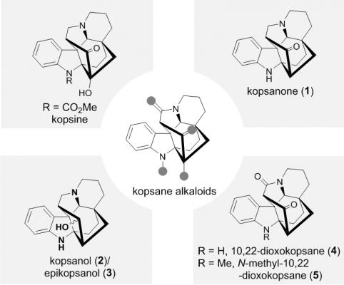 化生学院叶涛课题组完成了Kopsane家族多个天然产物的不对称全合成