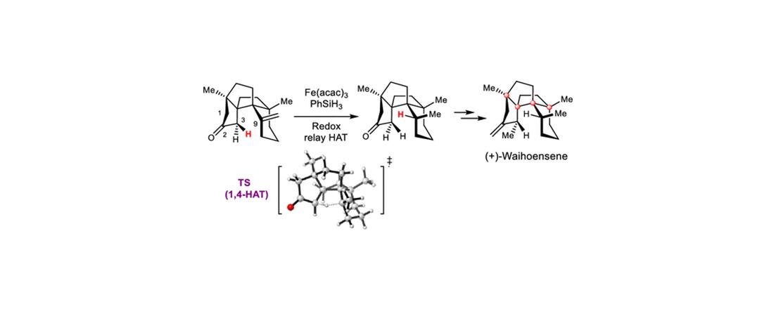 杨震课题组完成Waihoensene的不对称全合成
